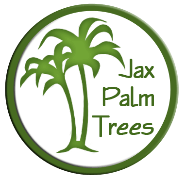 Jax Palm Trees - serving all the tree needs of Northeast Florida, Jacksonville, and the Jacksonville Beaches area with the best quality trees at guaranteed lowest prices.