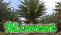 Jax Palm Trees offers the lowest prices in Jacksonville, Guaranteed.