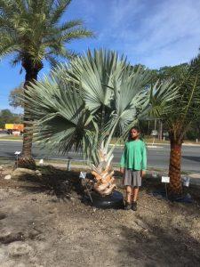 Jacksonville-Palm-Trees-Bismarck